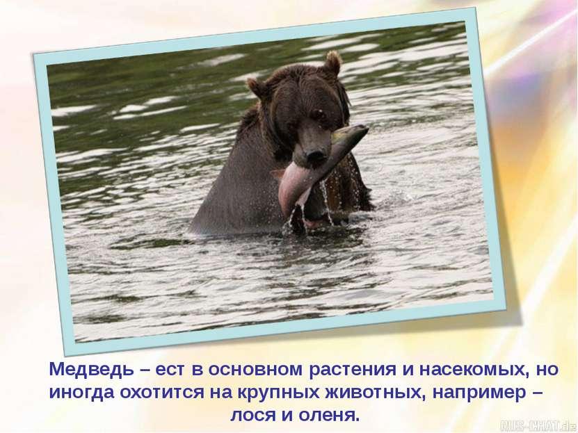 Медведь – ест в основном растения и насекомых, но иногда охотится на крупных ...