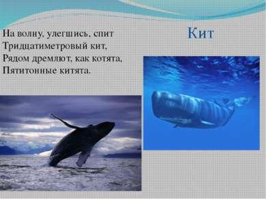 На волну, улегшись, спит Тридцатиметровый кит, Рядом дремлют, как котята, Пят...