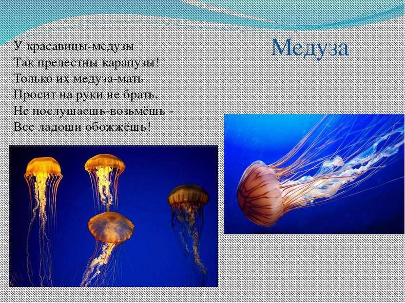 У красавицы-медузы Так прелестны карапузы! Только их медуза-мать Просит на ру...