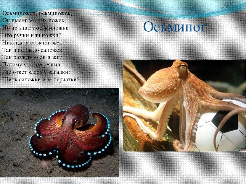 Осьминожек, осьминожек, Он имеет восемь ножек, Но не знают осьминожки: Это ру...