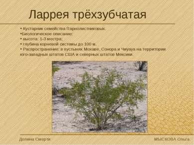 Кустарник семейства Парнолистниковых. Биологическое описание: высота: 1-3 мес...