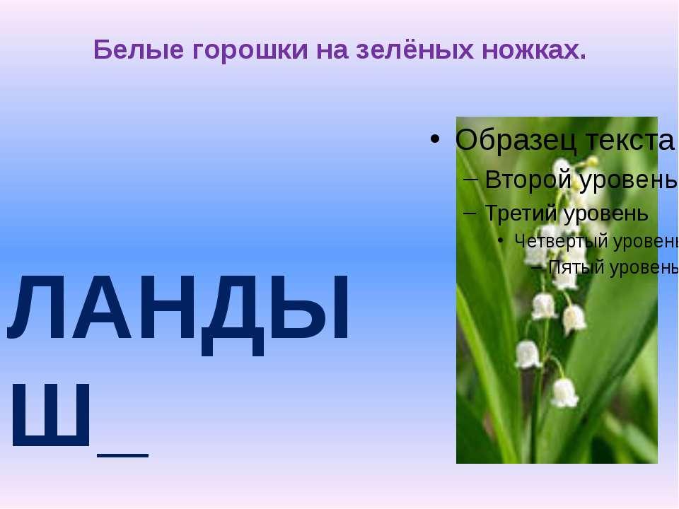Белые горошки на зелёных ножках. ЛАНДЫШ_ И
