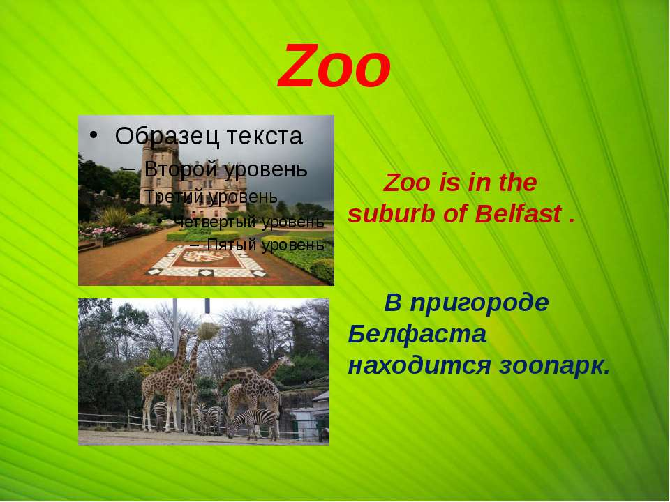 Zoo Zoo is in the suburb of Belfast . В пригороде Белфаста находится зоопарк.