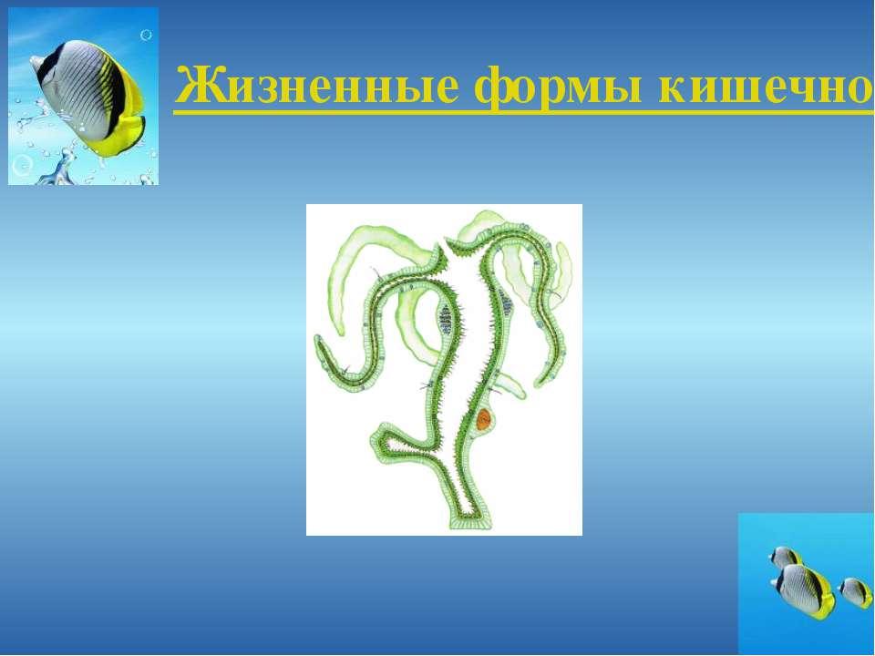 Жизненные формы кишечнополостных