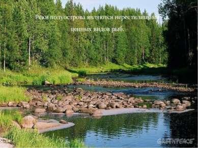 Реки полуострова являются нерестилищами ценных видов рыб.
