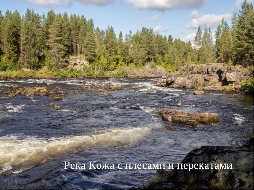 Река Кожа с плесами и перекатами