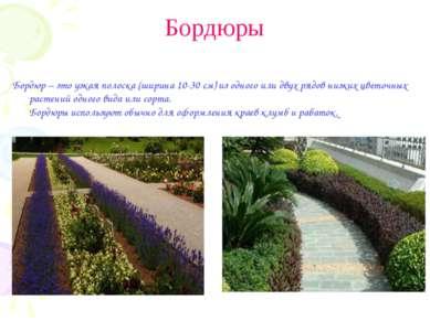 Бордюры Бордюр – это узкая полоска (ширина 10-30 см) из одного или двух рядов...