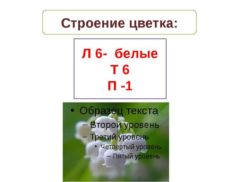 Строение цветка: Л 6- белые Т 6 П -1