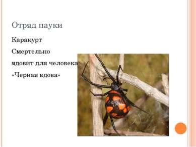 Отряд пауки Каракурт Смертельно ядовит для человека «Черная вдова»