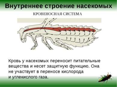 Сложный глаз насекомого состоит измножества мельчайших отдельных глазков с с...
