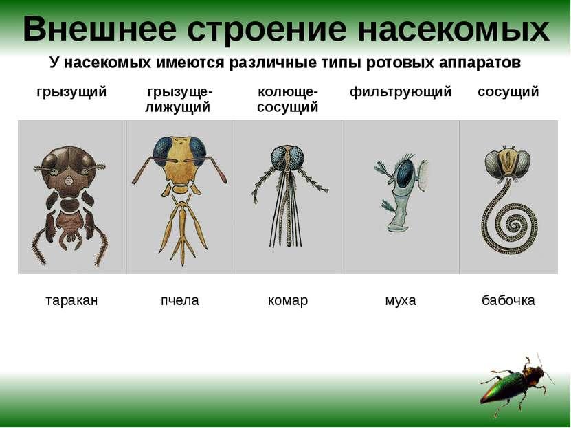 Особенности внешнего строения насекомого ВЫПОЛНИТЕ ЗАДАНИЕ Составьте таблицу:...