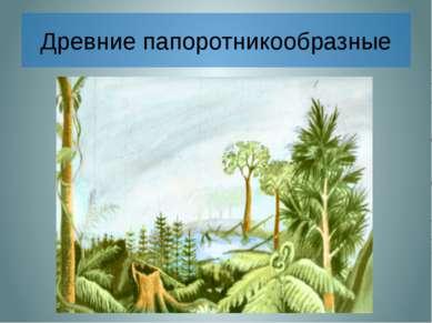 Древние папоротникообразные Около 300 млн. лет назад климат на Земле был тепл...