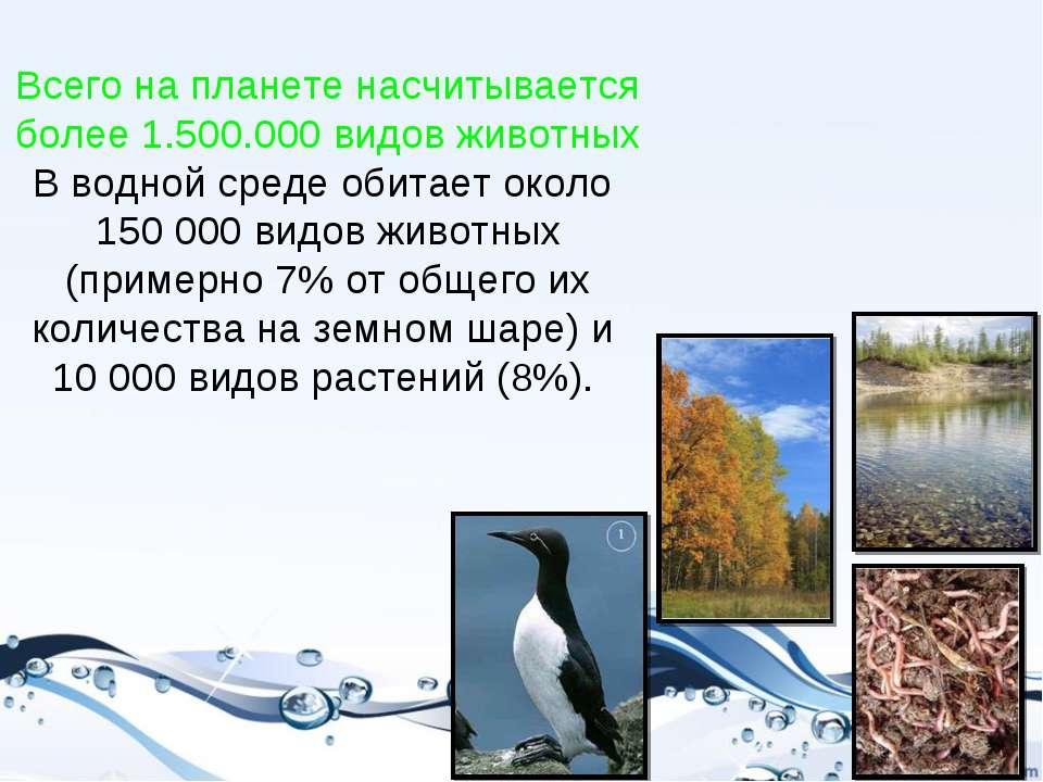 Всего на планете насчитывается более 1.500.000 видов животных В водной среде ...