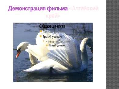 Демонстрация фильма «Алтайский край»