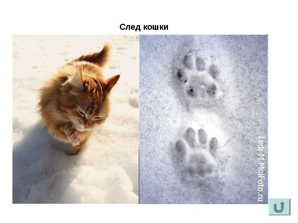 След кошки
