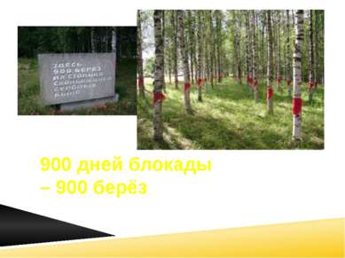 900 дней блокады – 900 берёз