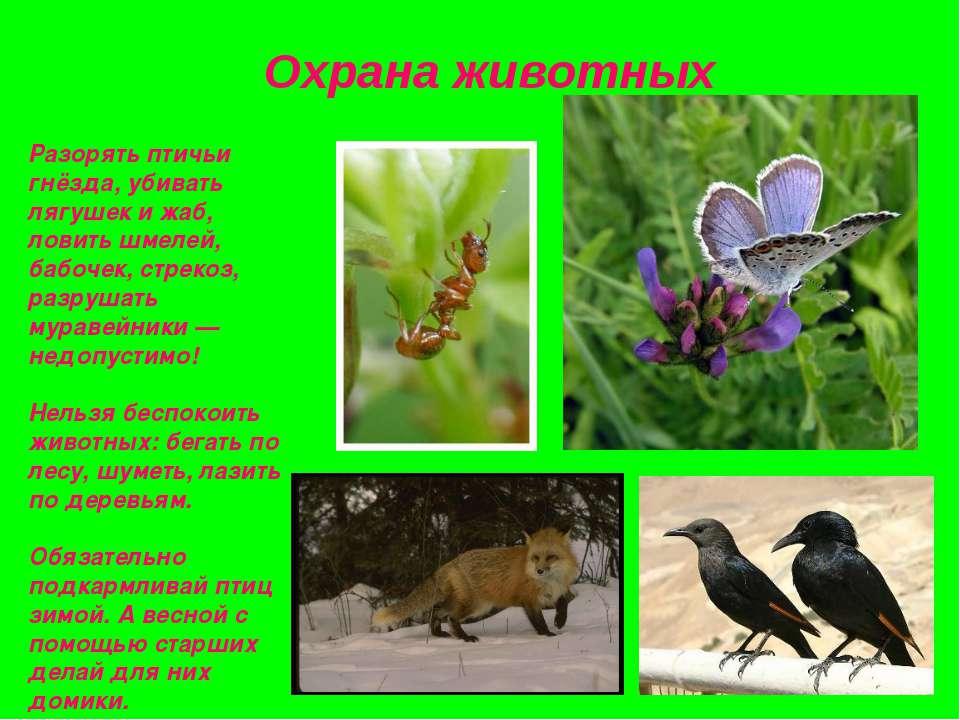 Охрана животных Разорять птичьи гнёзда, убивать лягушек и жаб, ловить шмелей,...