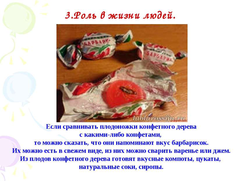 Если сравнивать плодоножки конфетного дерева с какими-либо конфетами, то можн...