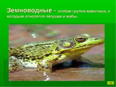 Земноводные - особая группа животных, к которым относятся лягушки и жабы.