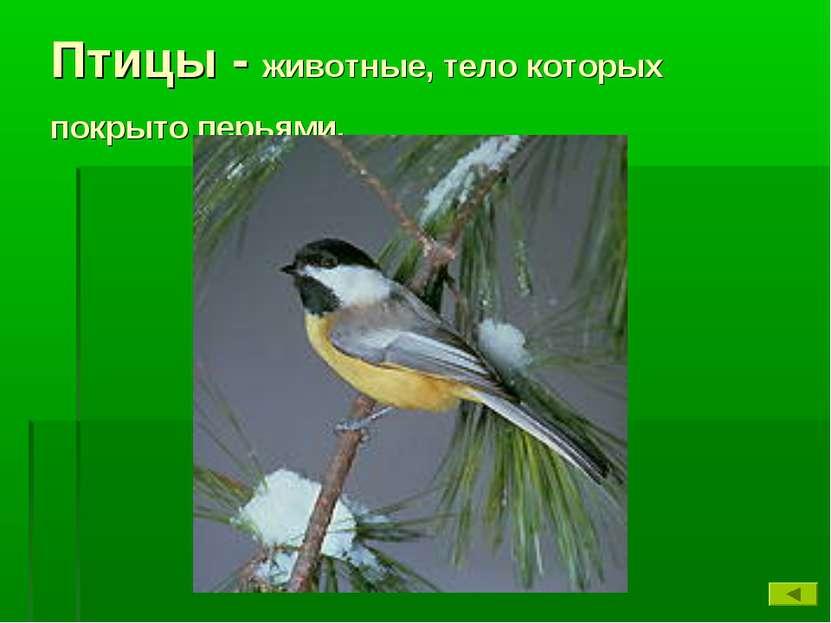 Птицы - животные, тело которых покрыто перьями.