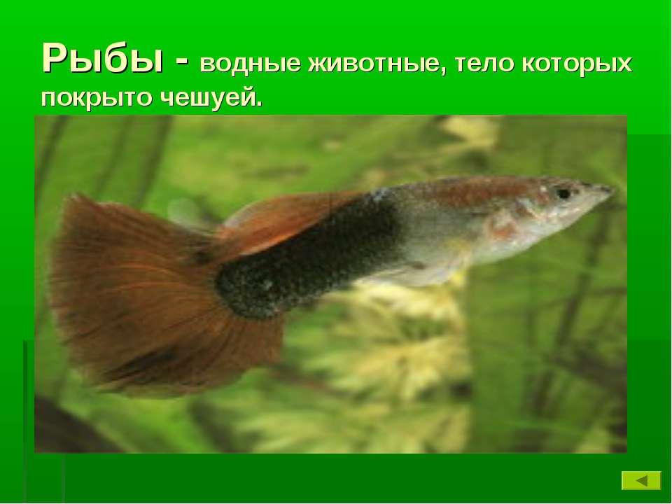 Рыбы - водные животные, тело которых покрыто чешуей.