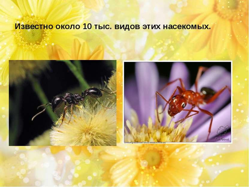 Известно около 10 тыс. видов этих насекомых.