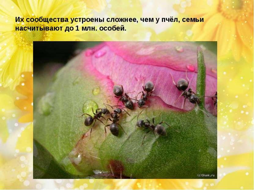 Их сообщества устроены сложнее, чем у пчёл, семьи насчитывают до 1 млн. особей.