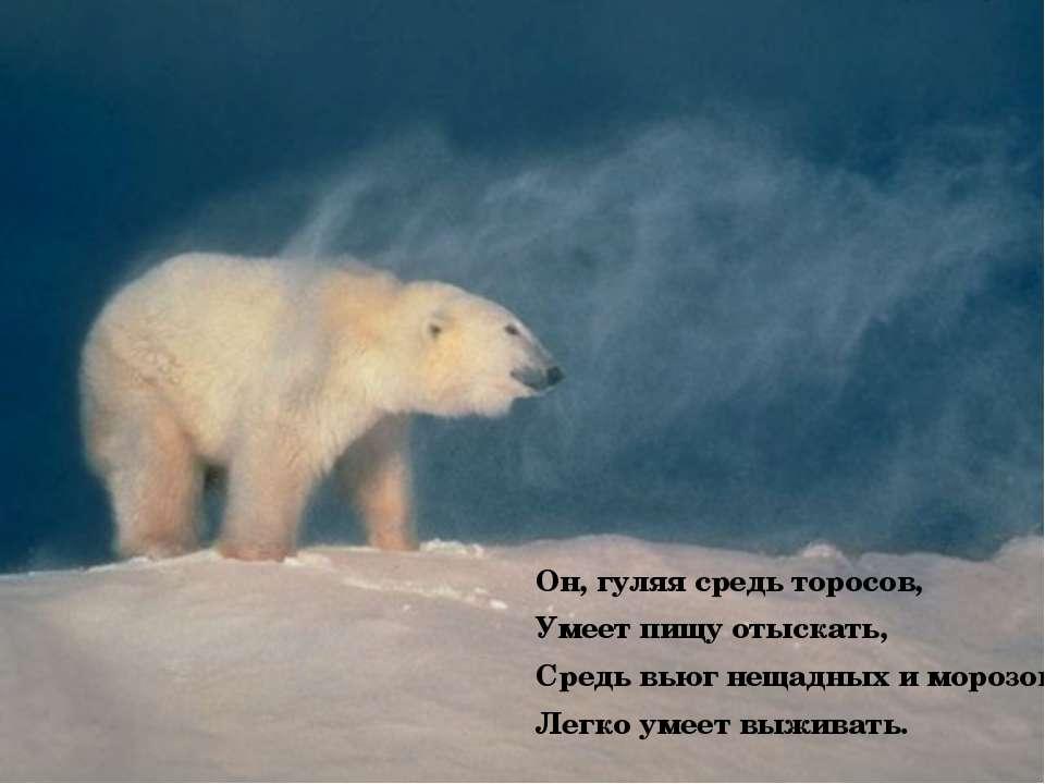 Он, гуляя средь торосов, Умеет пищу отыскать, Средь вьюг нещадных и морозов Л...