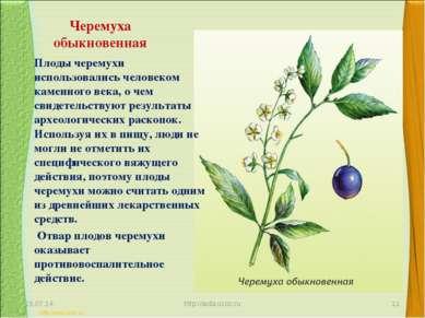 Черемуха обыкновенная Плоды черемухи использовались человеком каменного века,...