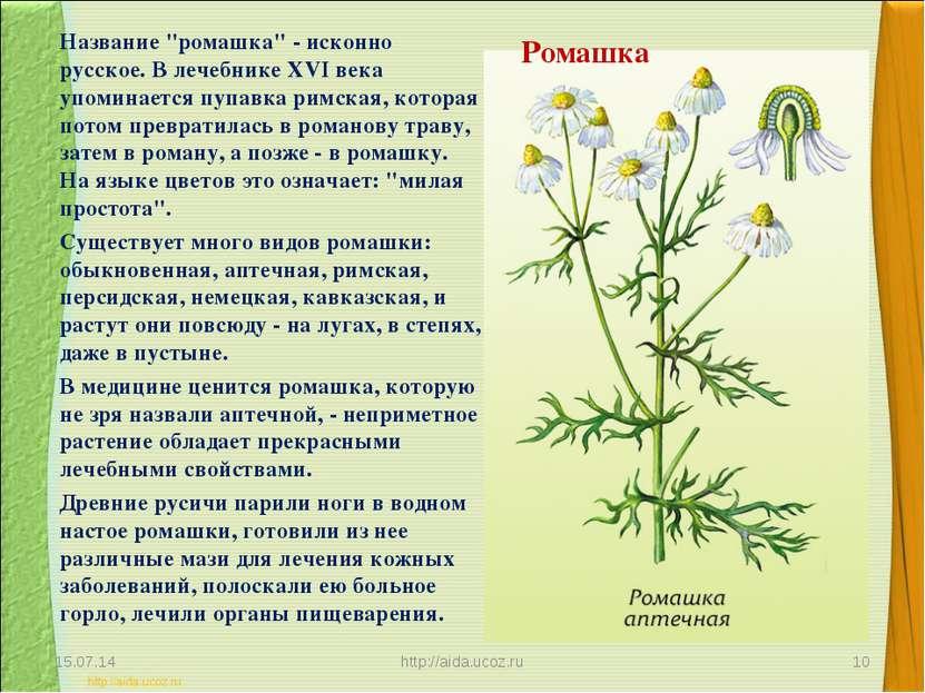 """Ромашка Название """"ромашка"""" - исконно русское. В лечебнике XVI века упоминаетс..."""