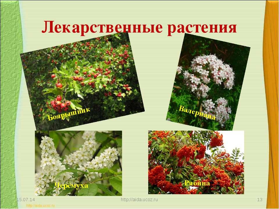 Лекарственные растения * http://aida.ucoz.ru * Валериана Боярышник Черёмуха Р...