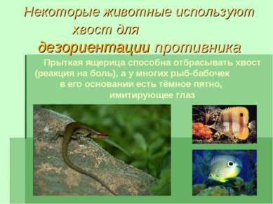Некоторые животные используют хвост для дезориентации противника Прыткая ящер...