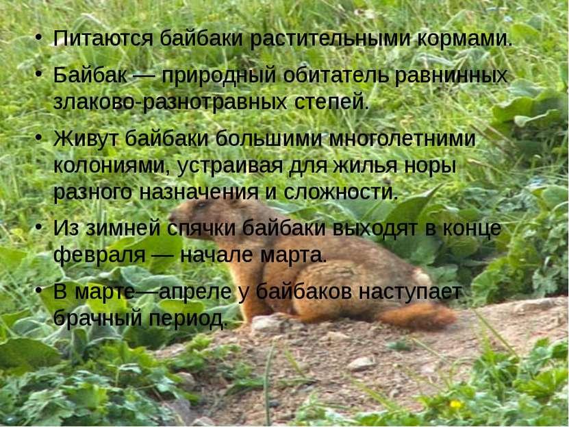Питаются байбаки растительными кормами. Байбак— природный обитатель равнинны...