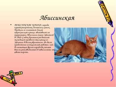 Абиссинская АБИССИНСКАЯ КОШКА, порода короткошерстных домашних кошек. Предком...