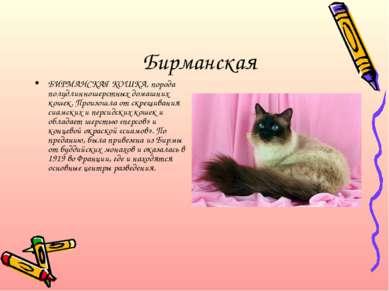 Бирманская БИРМАНСКАЯ КОШКА, порода полудлинношерстных домашних кошек. Произо...
