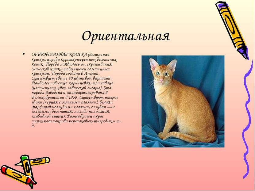 Ориентальная ОРИЕНТАЛЬНАЯ КОШКА (восточная кошка), порода короткошерстных дом...