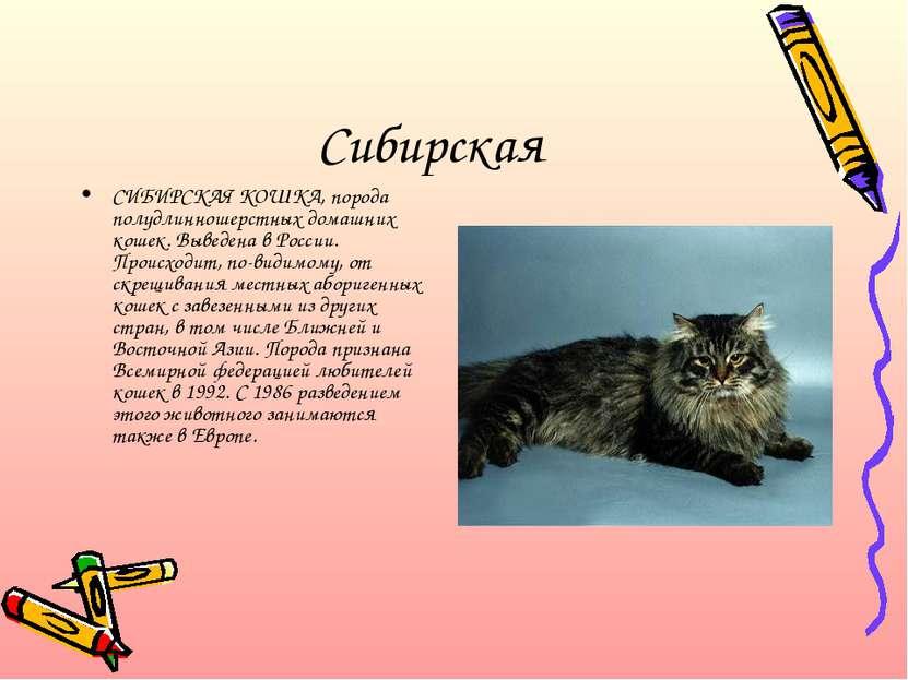 Сибирская СИБИРСКАЯ КОШКА, порода полудлинношерстных домашних кошек. Выведена...