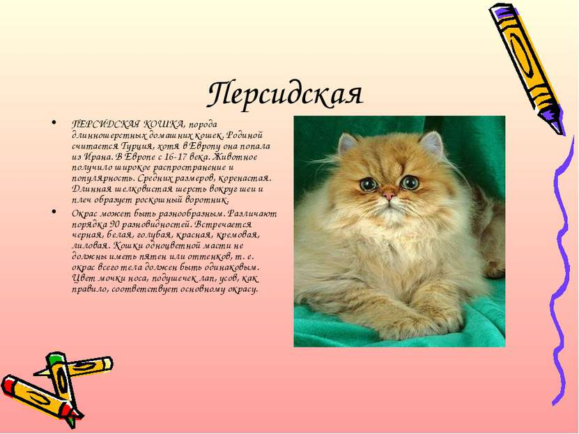 Шаблон презентации о кошках скачать бесплатно