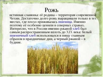 Рожь истинная славянка: её родина – территория современной Чехии. Достаточно ...