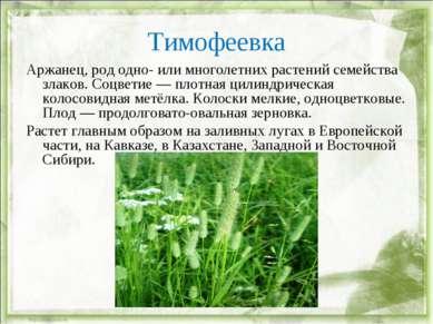 Тимофеевка Аржанец, род одно- или многолетних растений семейства злаков. Соцв...