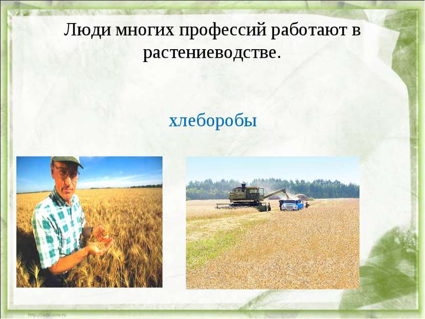 Люди многих профессий работают в растениеводстве. хлеборобы