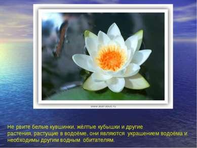 Не рвите белые кувшинки, жёлтые кубышки и другие растения, растущие в водоёме...