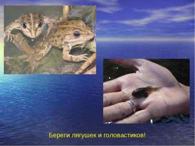 Береги лягушек и головастиков! Береги лягушек и головастиков!