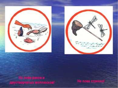 Не лови раков и двустворчатых моллюсков! Не лови стрекоз! Не лови раков и дву...