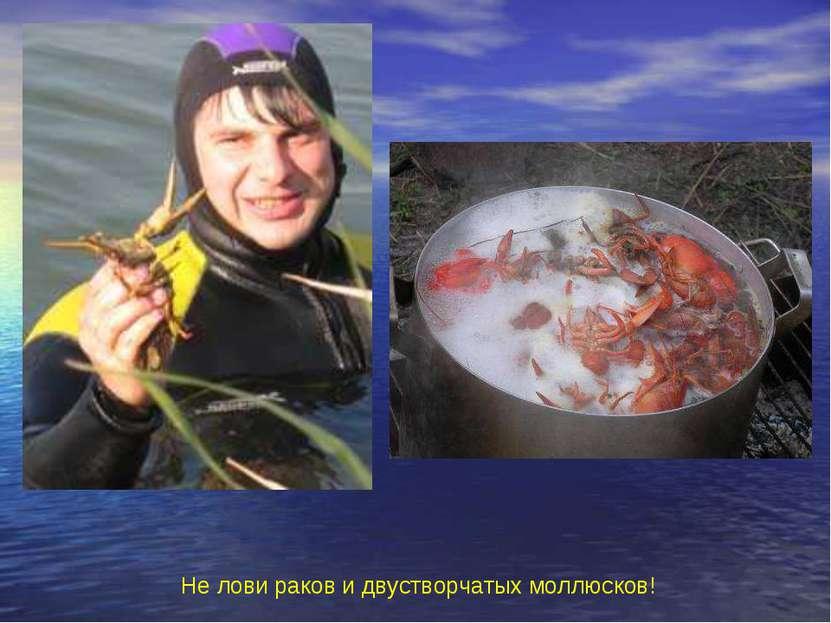 Не лови раков и двустворчатых моллюсков! Не лови раков и двустворчатых моллюс...