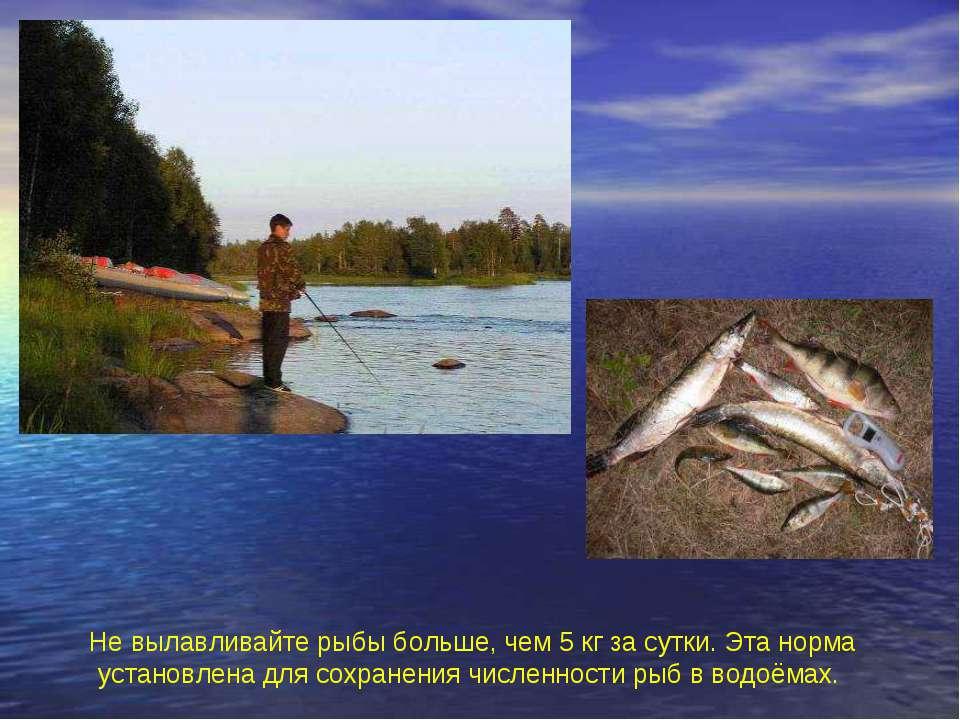 Не вылавливайте рыбы больше, чем 5 кг за сутки. Эта норма установлена для сох...