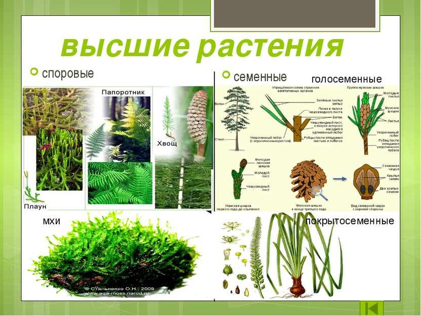 Роль растений в жизни природы Велика роль растений в жизни нашей планеты. Одн...