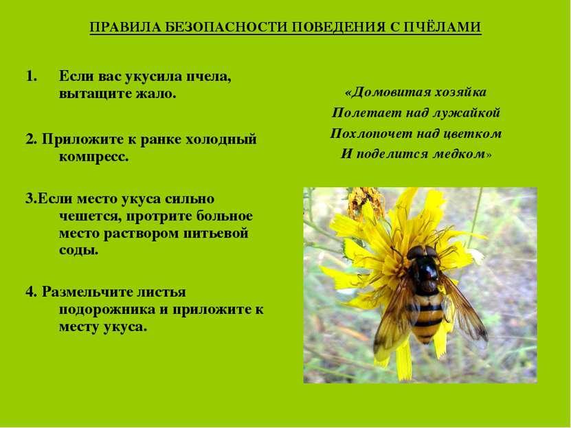 ПРАВИЛА БЕЗОПАСНОСТИ ПОВЕДЕНИЯ С ПЧЁЛАМИ Если вас укусила пчела, вытащите жал...
