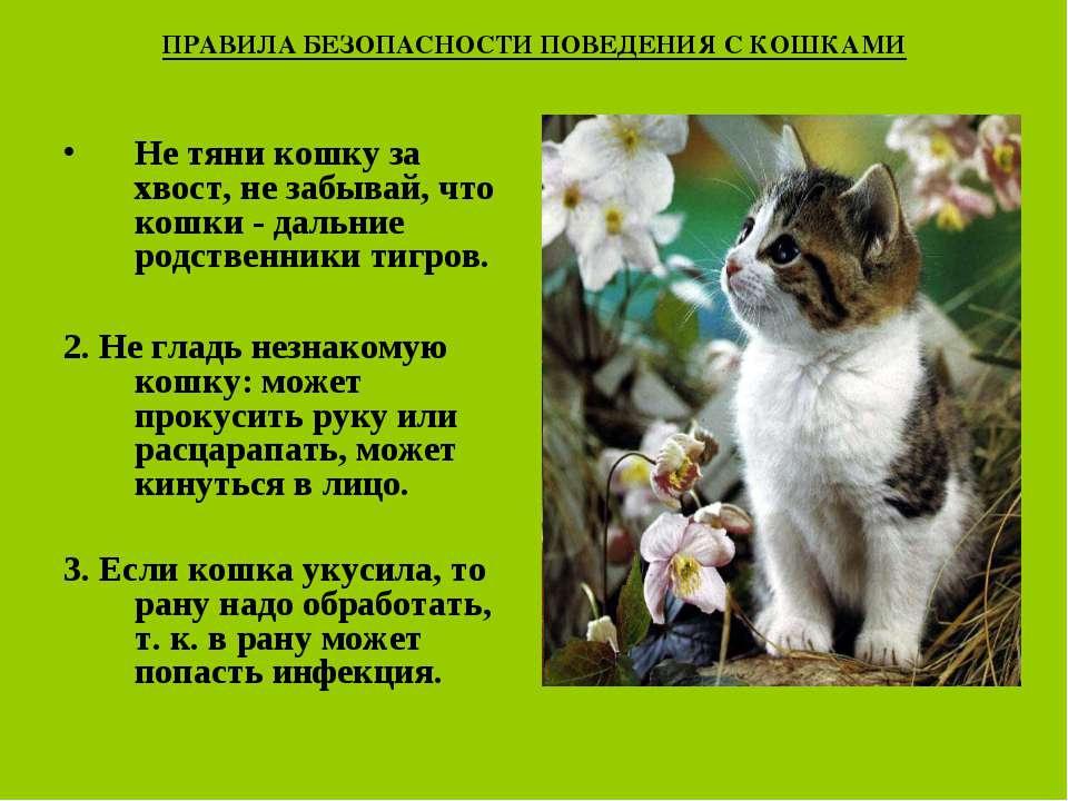 ПРАВИЛА БЕЗОПАСНОСТИ ПОВЕДЕНИЯ С КОШКАМИ Не тяни кошку за хвост, не забывай, ...