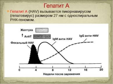 Гепатит A (HAV) вызывается пикорнавирусом (гепатовирус) размером 27 нм с одно...